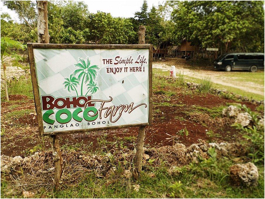 bohol-coco-farm